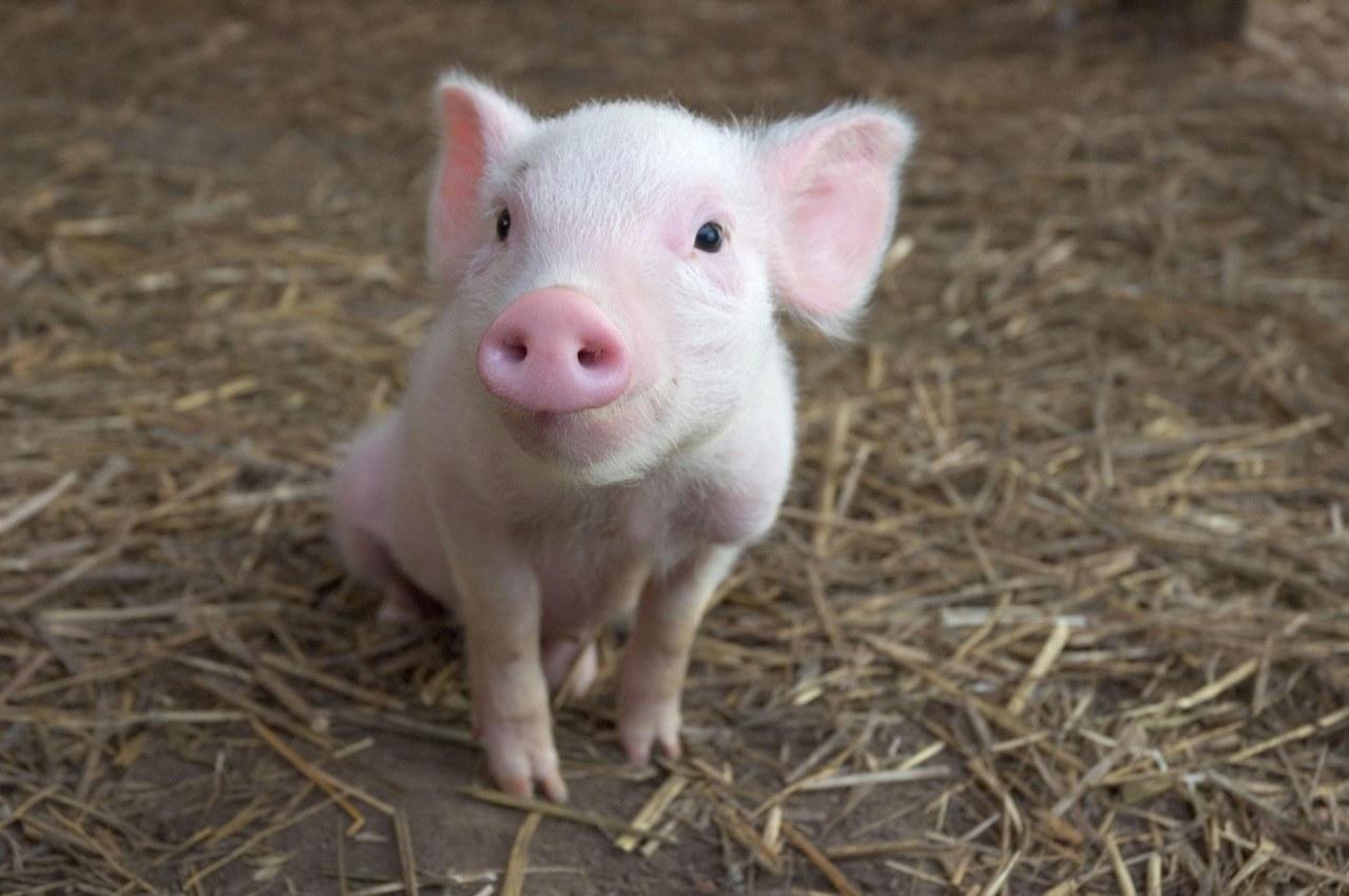 Schweinchen Wilbur und seine Freunde - Bild 29