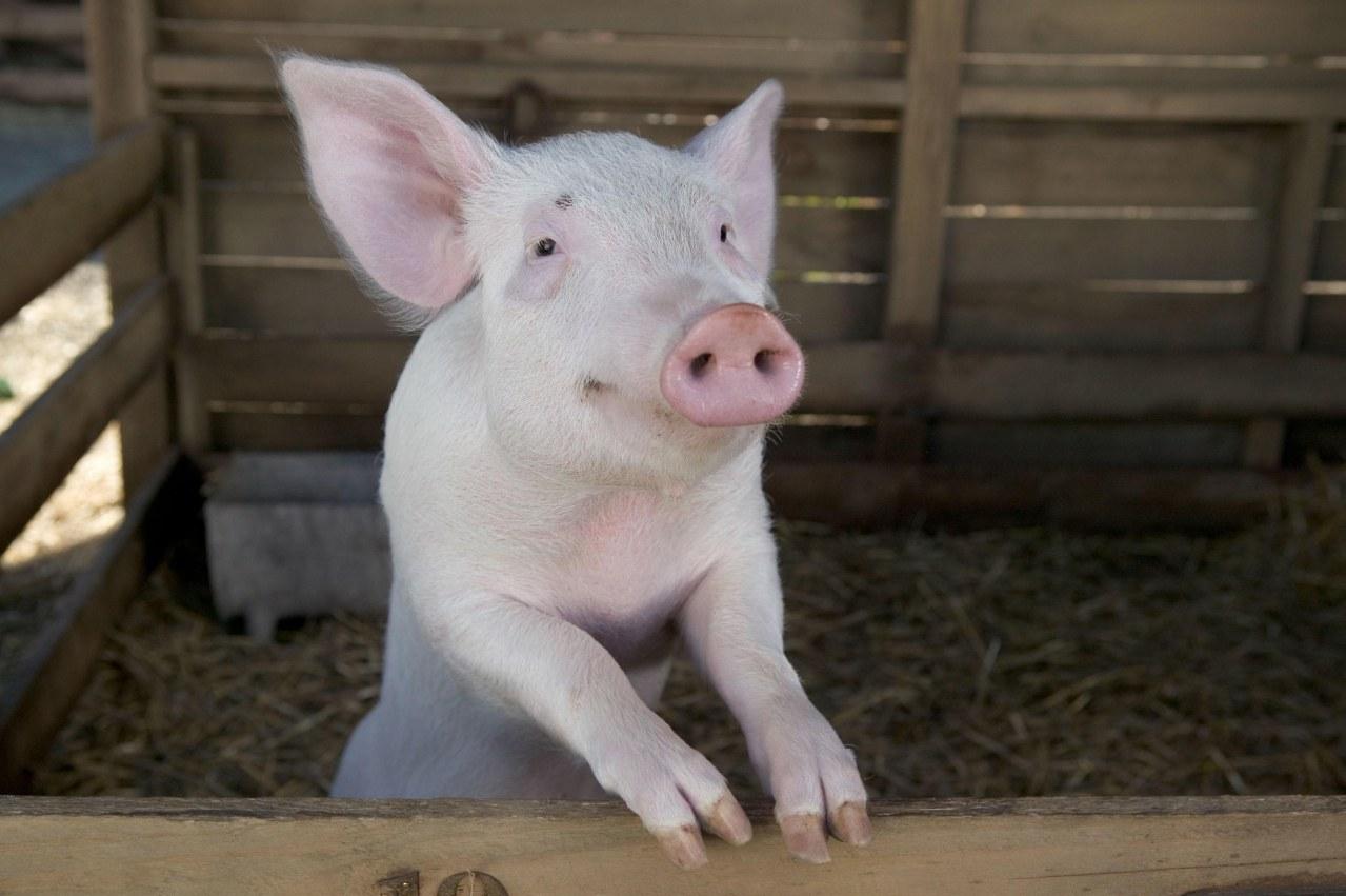 Schweinchen Wilbur und seine Freunde - Bild 30