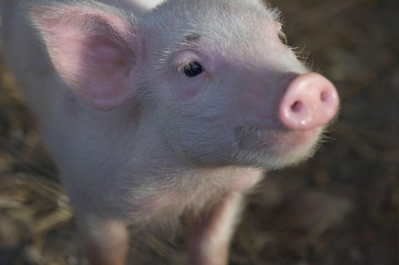 Schweinchen Wilbur und seine Freunde - Bild 31