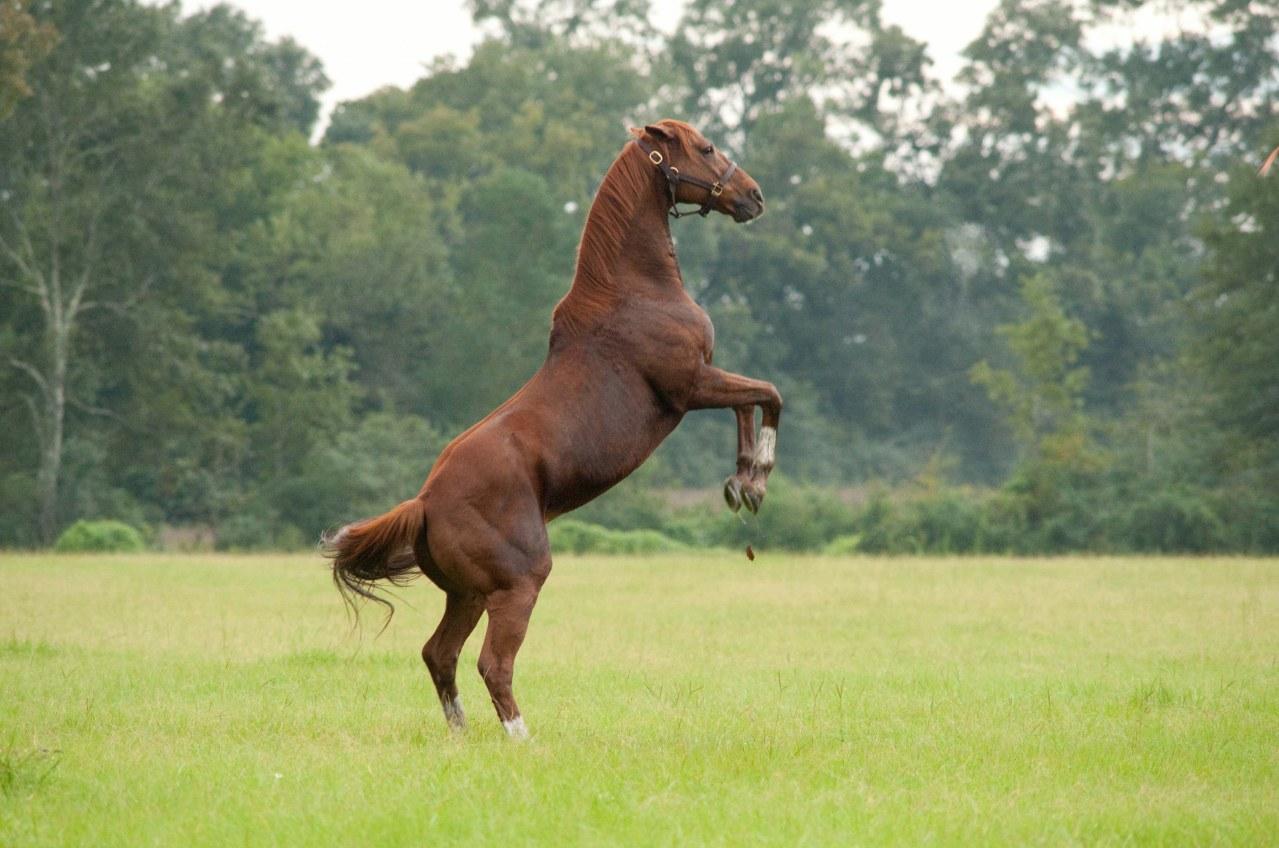 Secretariat - Ein Pferd wird zur Legende - Bild 13
