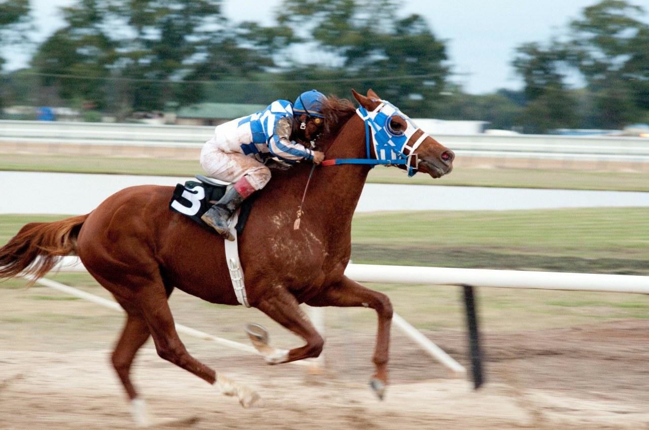 Secretariat - Ein Pferd wird zur Legende - Bild 21