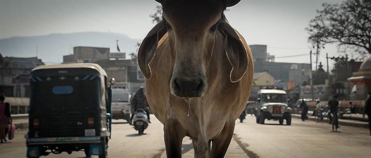 The End of Meat - Eine Welt ohne Fleisch - Bild 1