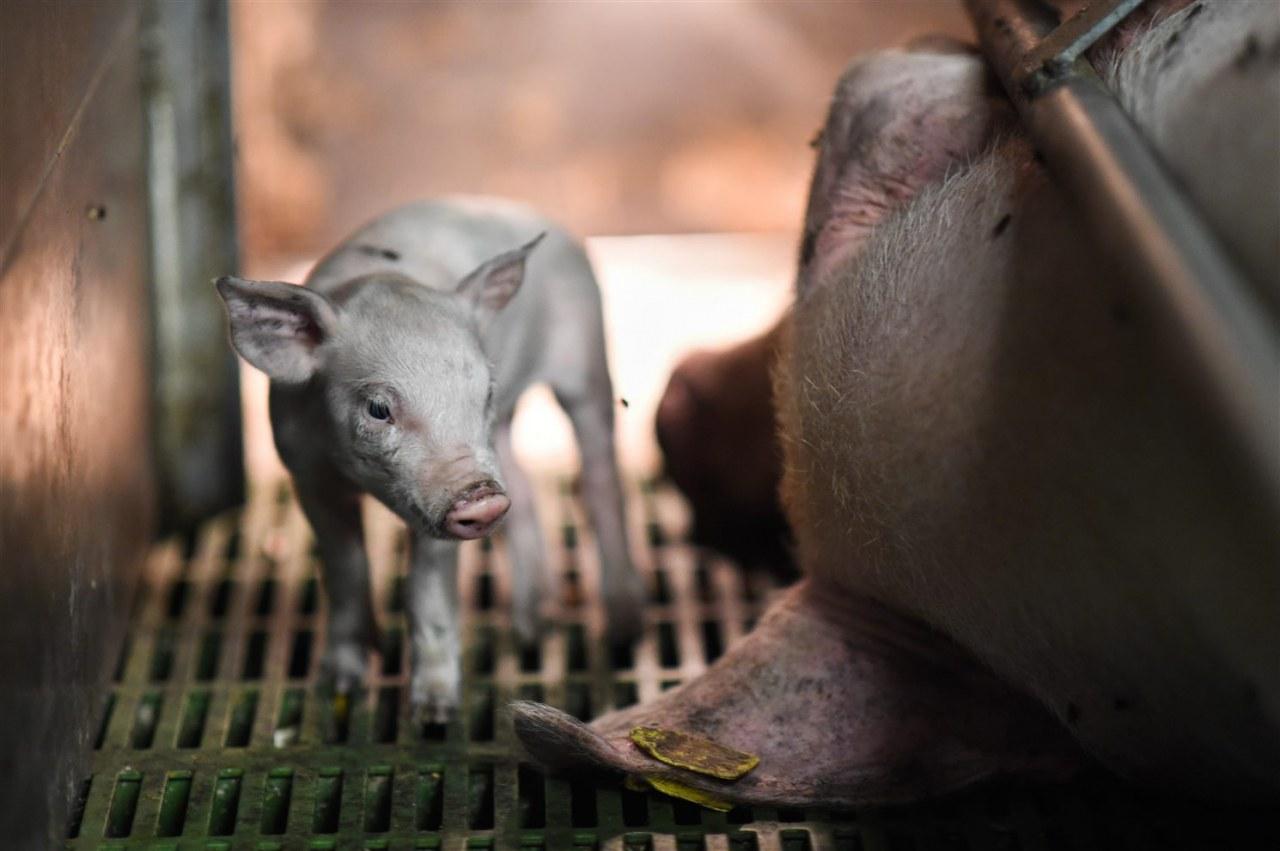 The End of Meat - Eine Welt ohne Fleisch - Bild 4