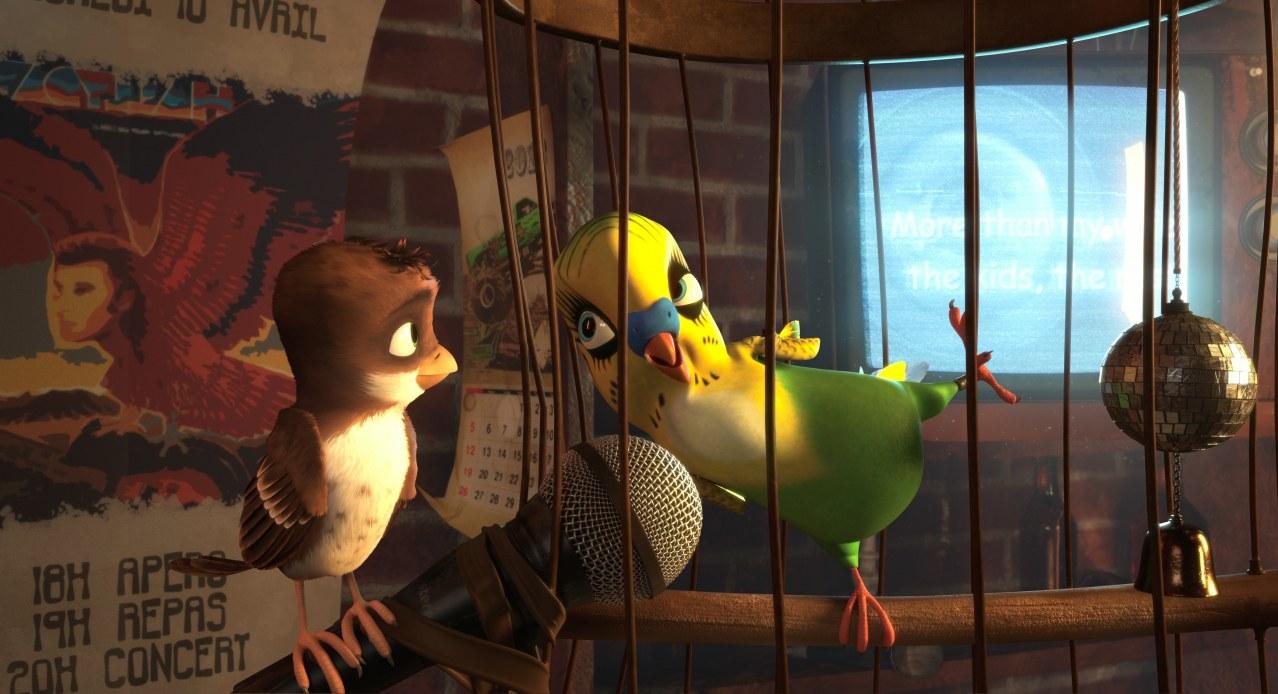 Überflieger: Kleine Vögel - großes Geklapper - Bild 12