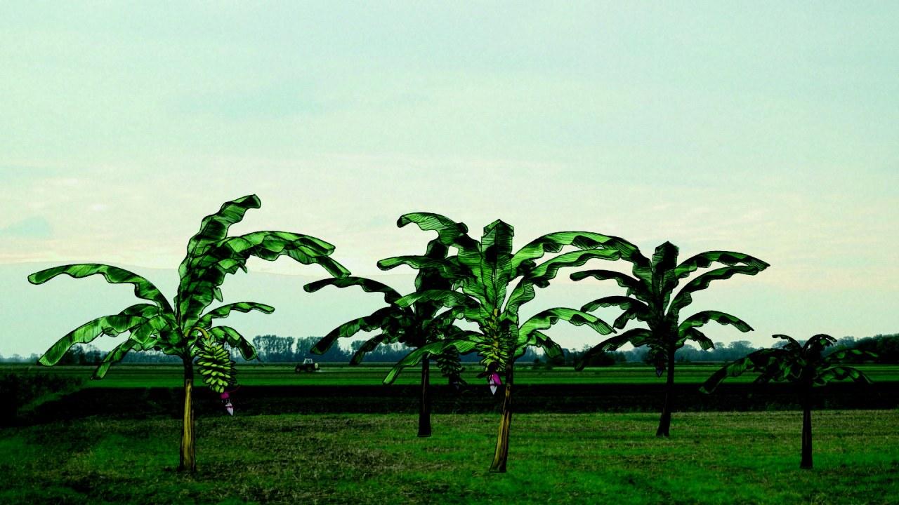 Von Bananenbäumen träumen - Bild 1