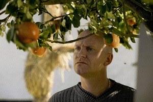 Adams Äpfel - Bild 2
