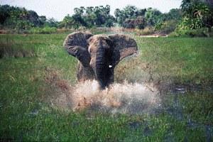 African Adventure - Safari im Okavango - Bild 2