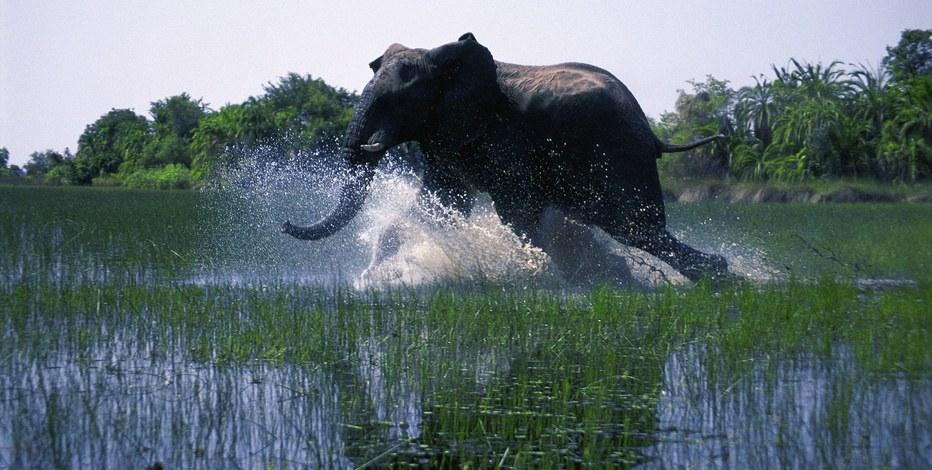 African Safari 3D - Bild 9