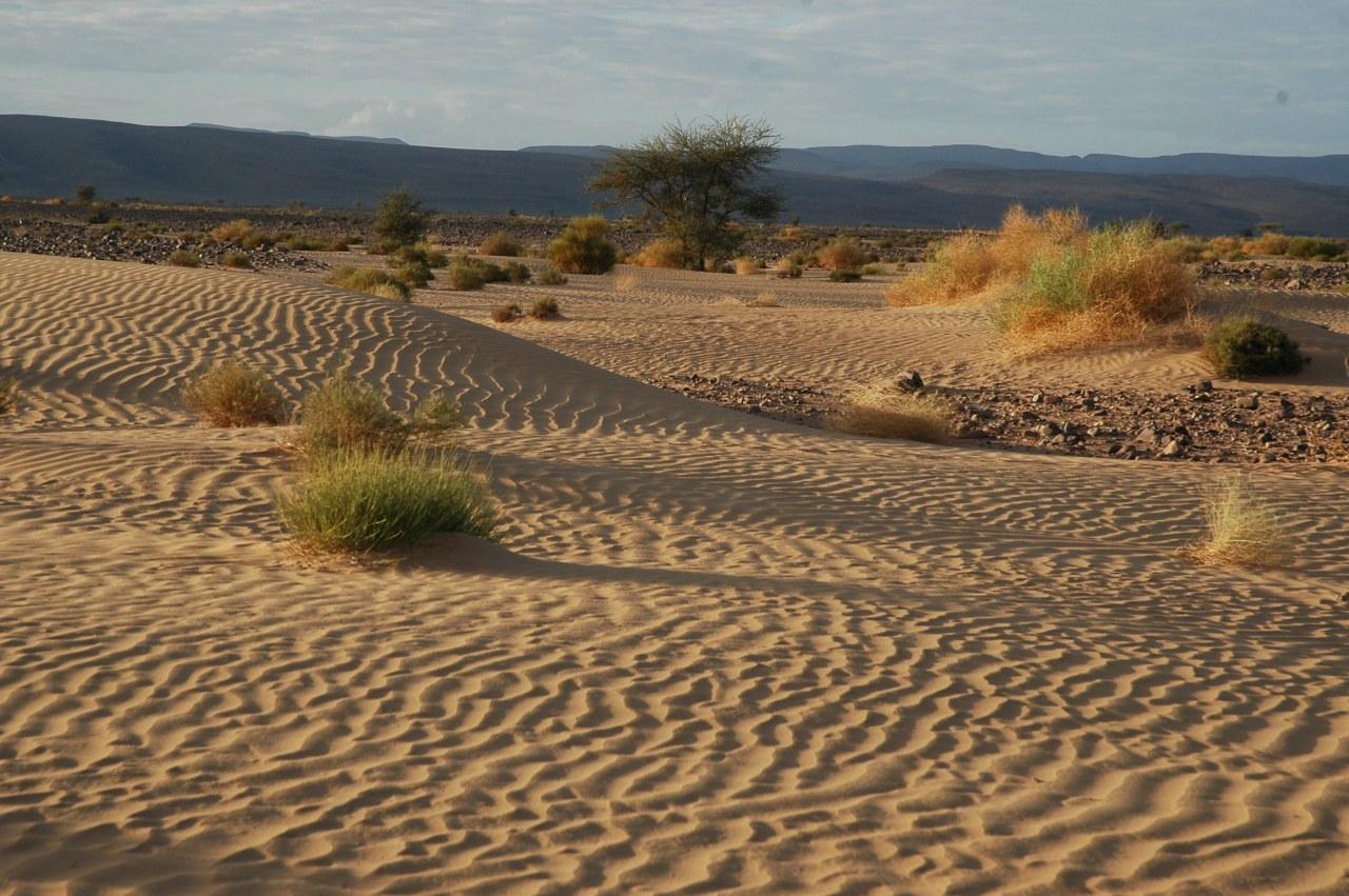 Allein die Wüste - Bild 2