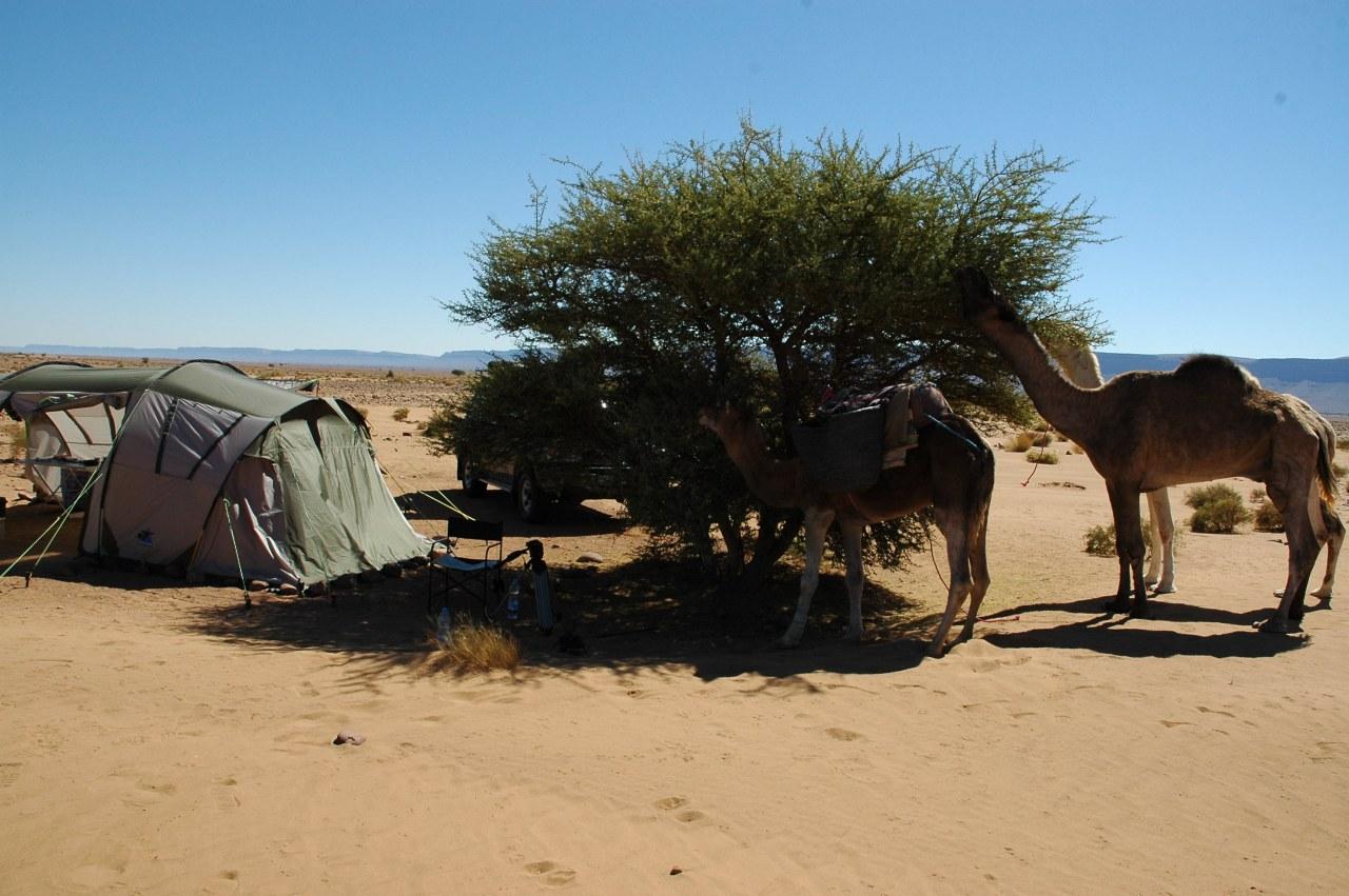 Allein die Wüste - Bild 5