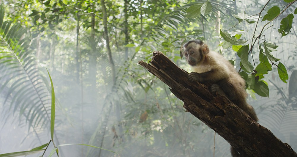 AMAZONIA - Abenteuer im Regenwald - Bild 1