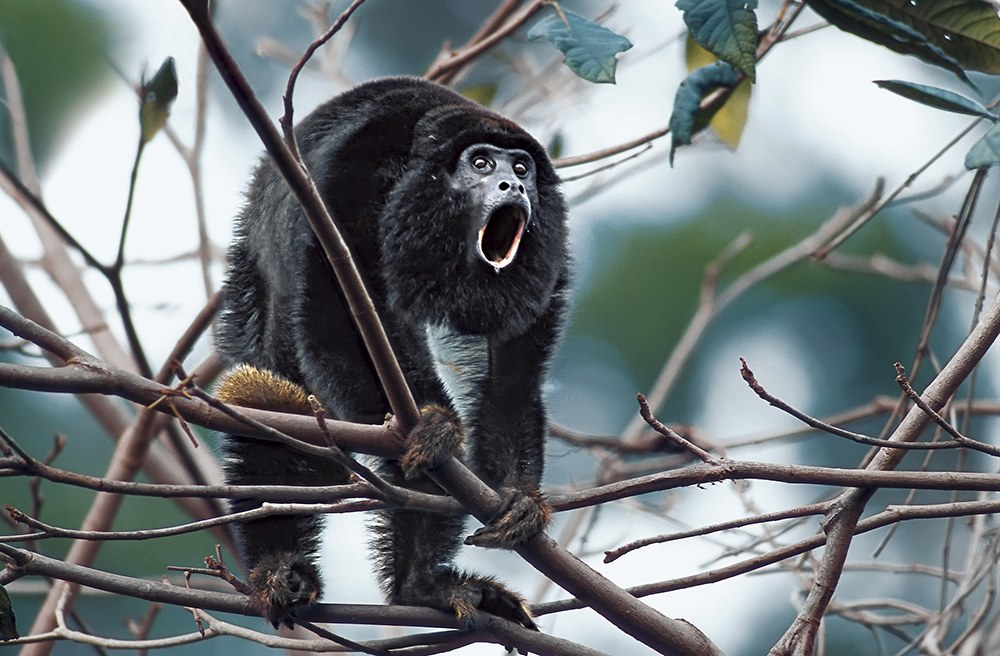 AMAZONIA - Abenteuer im Regenwald - Bild 3