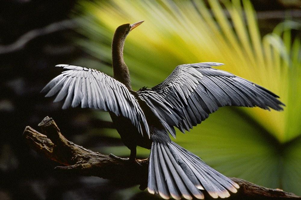 AMAZONIA - Abenteuer im Regenwald - Bild 4