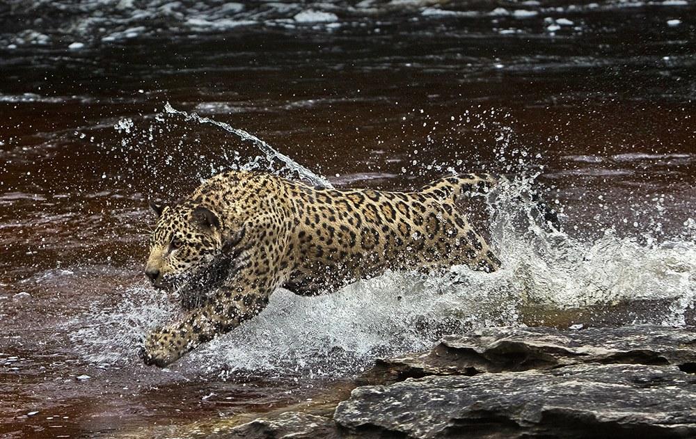 AMAZONIA - Abenteuer im Regenwald - Bild 6