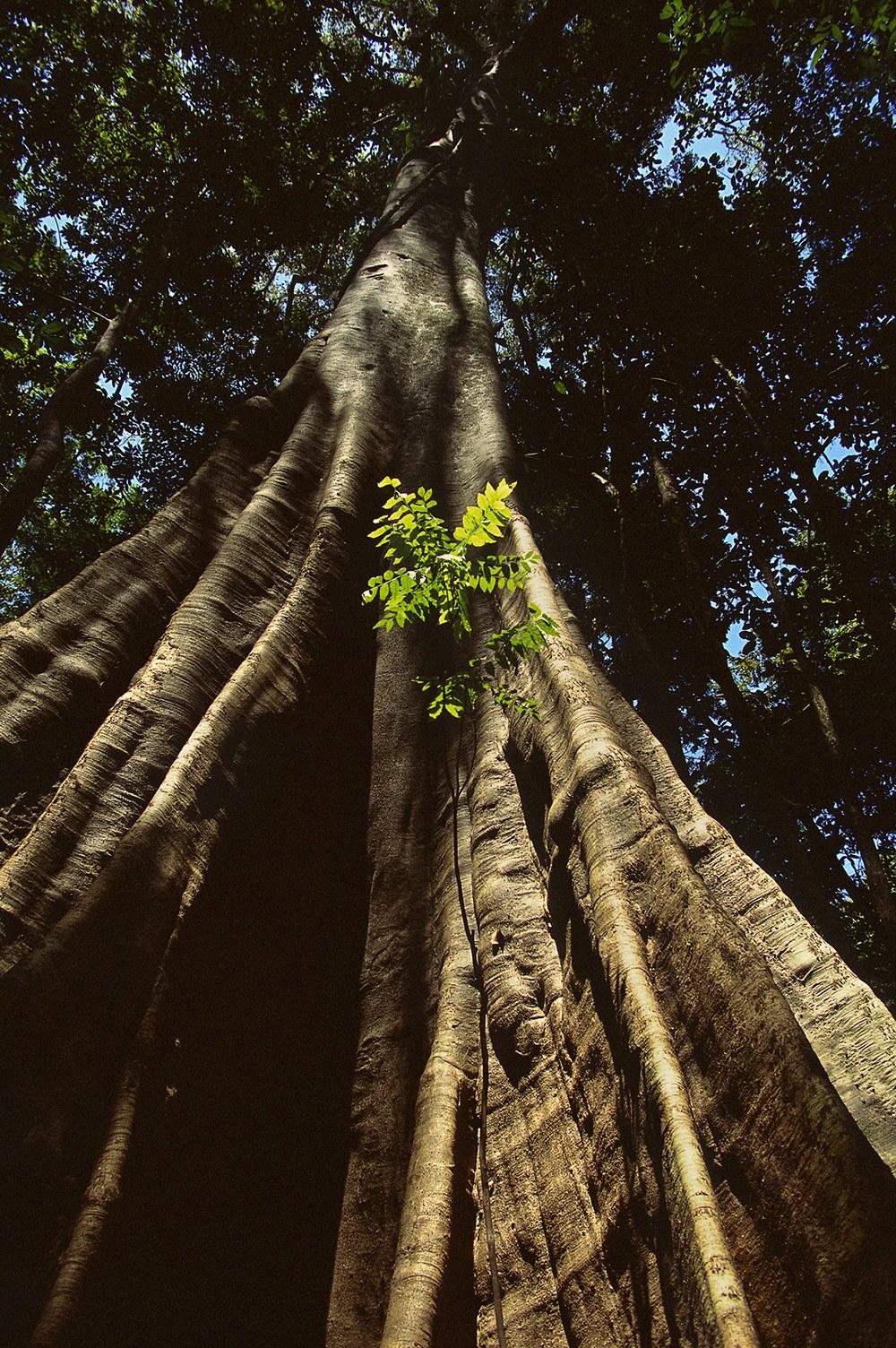 AMAZONIA - Abenteuer im Regenwald - Bild 8
