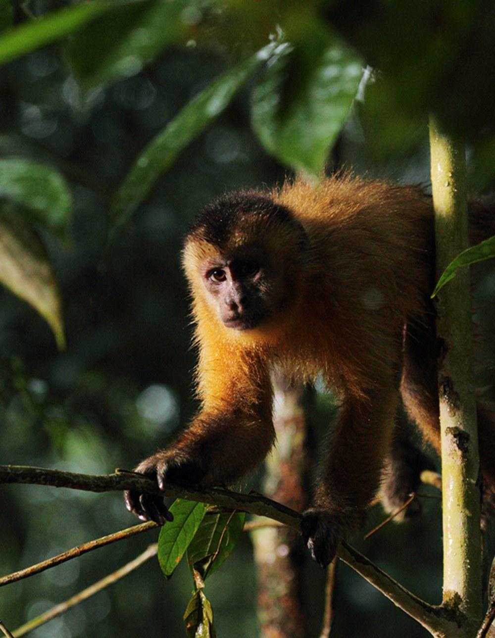 AMAZONIA - Abenteuer im Regenwald - Bild 9
