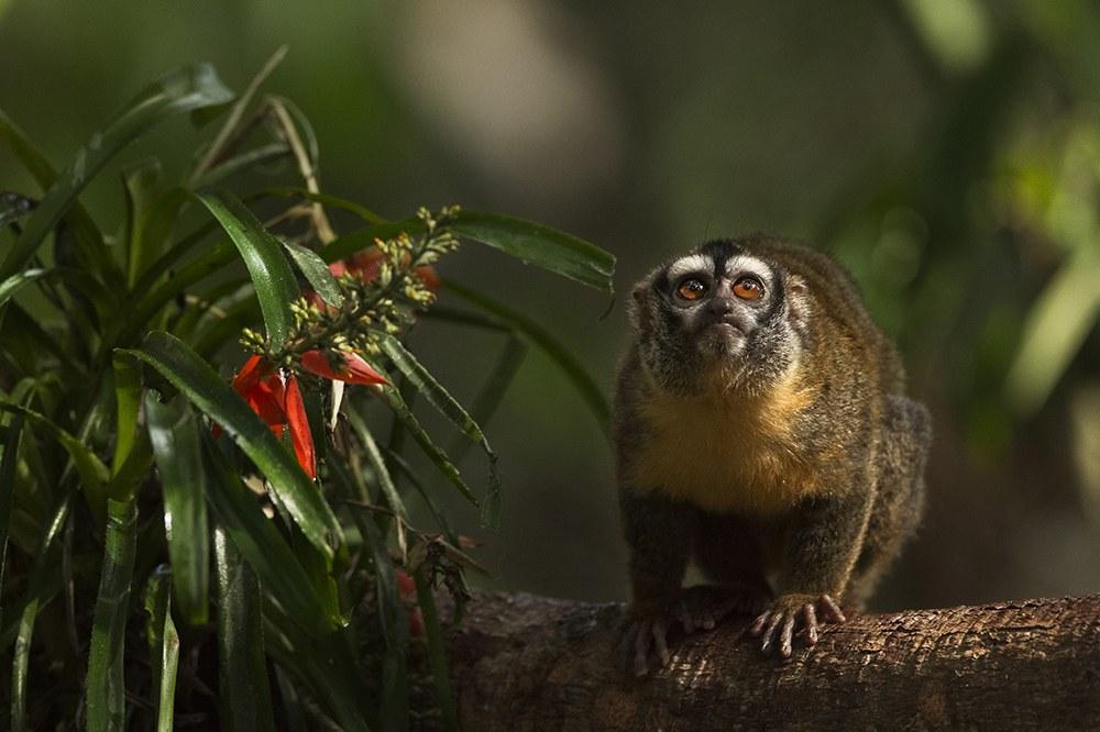 AMAZONIA - Abenteuer im Regenwald - Bild 10