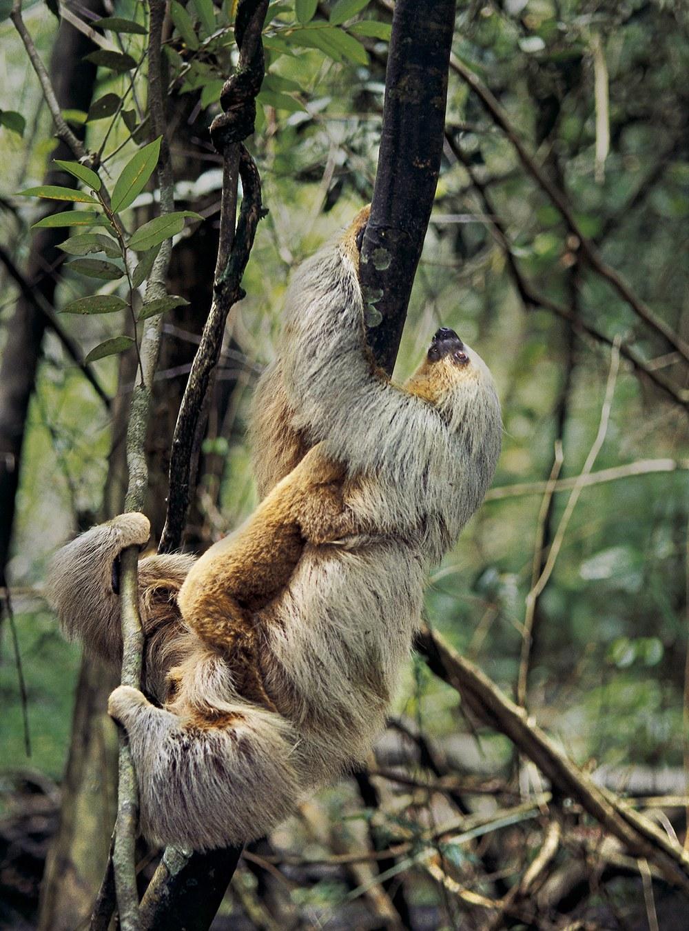 AMAZONIA - Abenteuer im Regenwald - Bild 12
