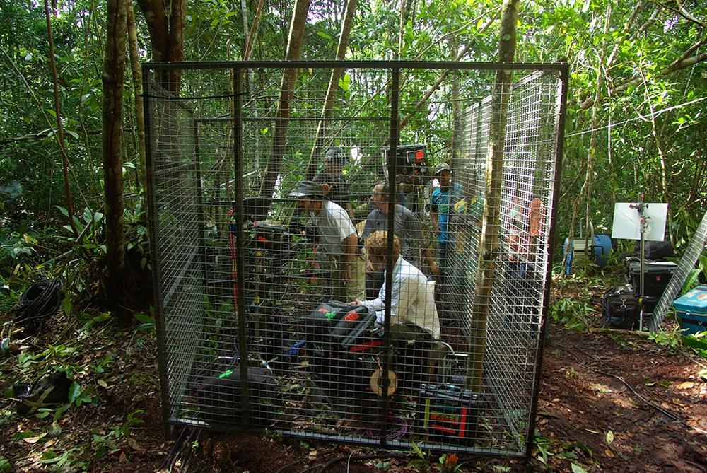 AMAZONIA - Abenteuer im Regenwald - Bild 15