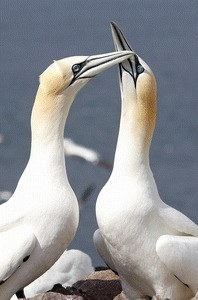 Animals in Love - Bild 2