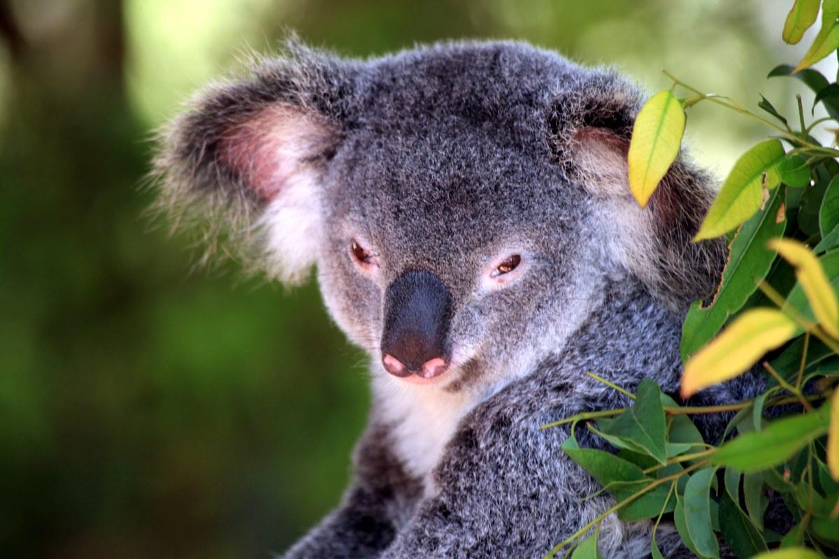 Australien in 100 Tagen - Bild 9