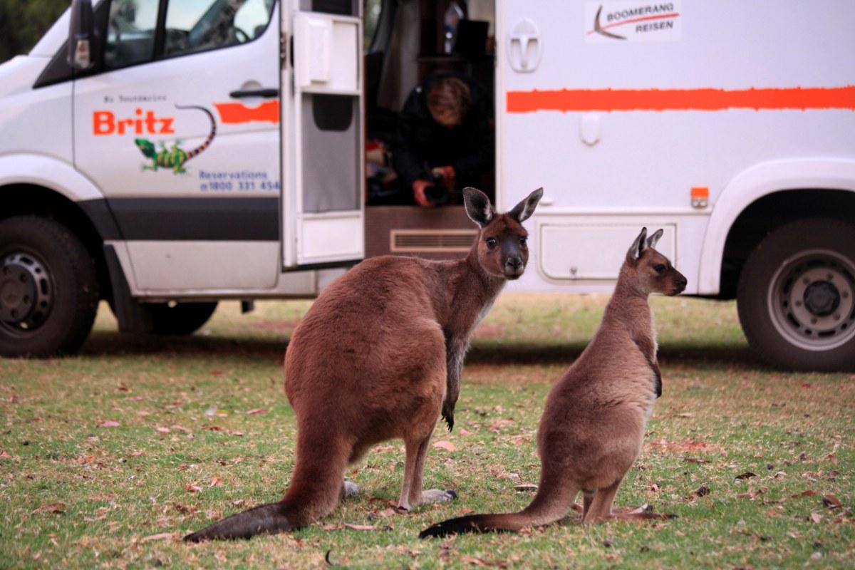 Australien in 100 Tagen - Bild 18
