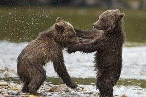 Bären - Bild 2