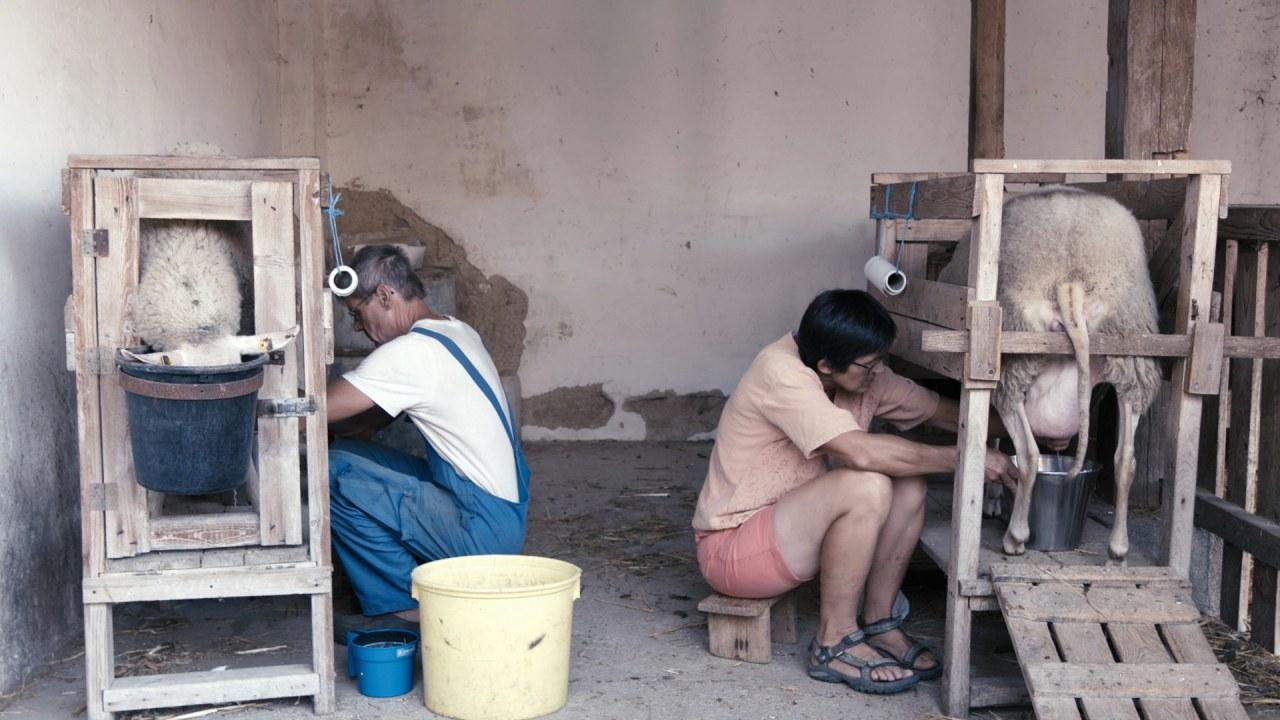 Bauer unser: Billige Nahrung - teuer erkauft - Bild 1
