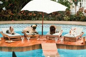 Beverly Hills Chihuahua - Bild 4