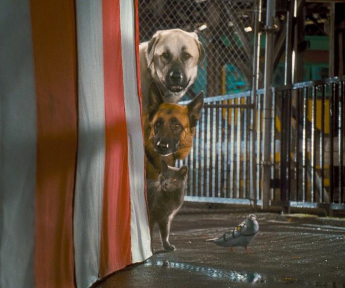 Cats & Dogs: Die Rache der Kitty Kahlohr (3D) - Bild 3