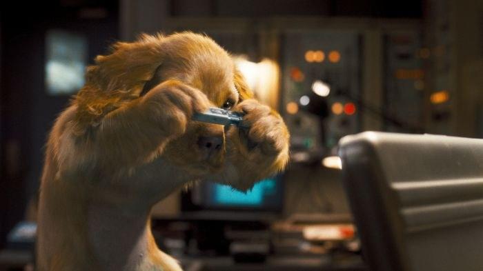 Cats & Dogs: Die Rache der Kitty Kahlohr (3D) - Bild 1