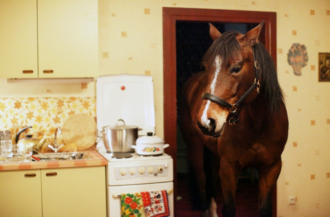 Das Pferd auf dem Balkon - Bild 16