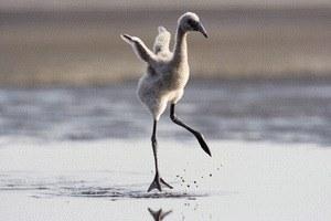 Das Geheimnis der Flamingos - Bild 2