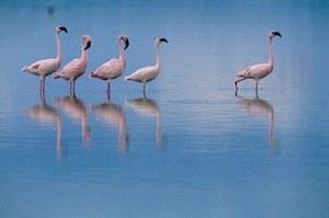 Das Geheimnis der Flamingos - Bild 1