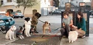 Das Hundehotel - Bild 1