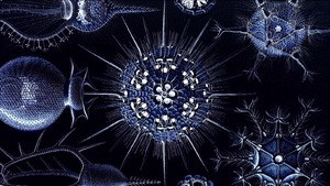 Das kreative Universum - Naturwissenschaft und Spiritualität im Dialog - Bild 2