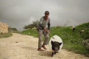Das Schwein von Gaza - Bild 1