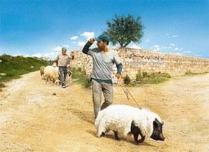 Das Schwein von Gaza - Bild 2