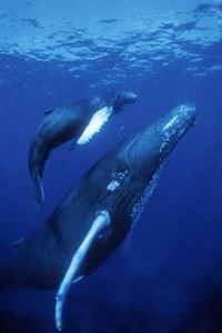 Delfine und Wale 3D - Bild 2