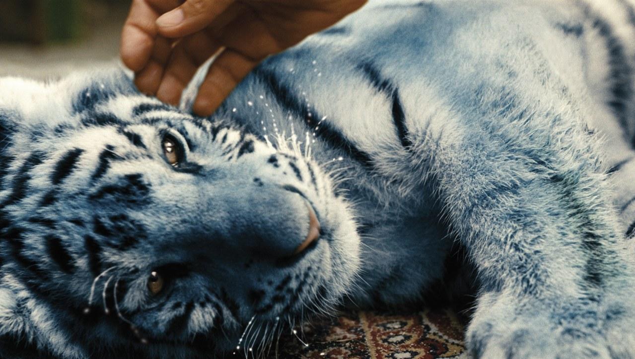 Der blaue Tiger - Bild 5