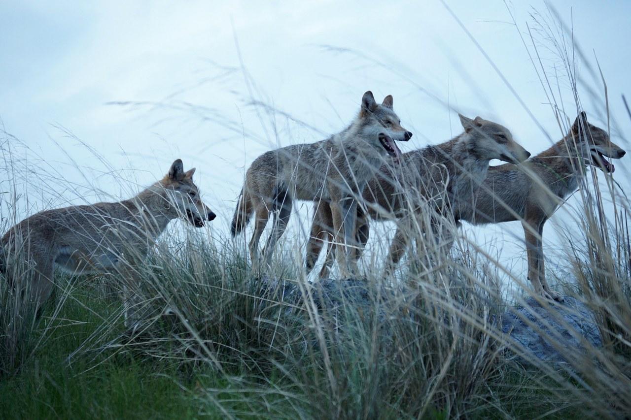 Der letzte Wolf - Bild 2