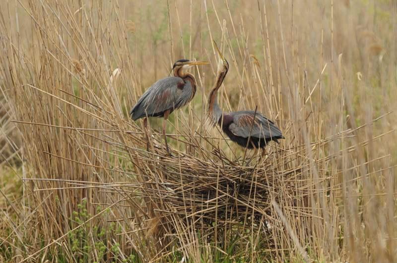 Deutschlands wilde Vögel - Teil 2 - Die Reise geht weiter - Bild 1
