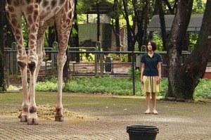 Die Nacht der Giraffe - Bild 2