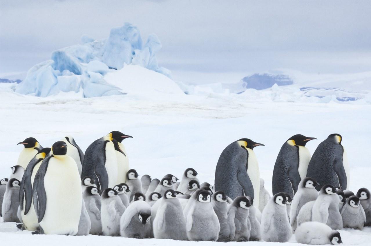 Die Reise der Pinguine 2 - Bild 1