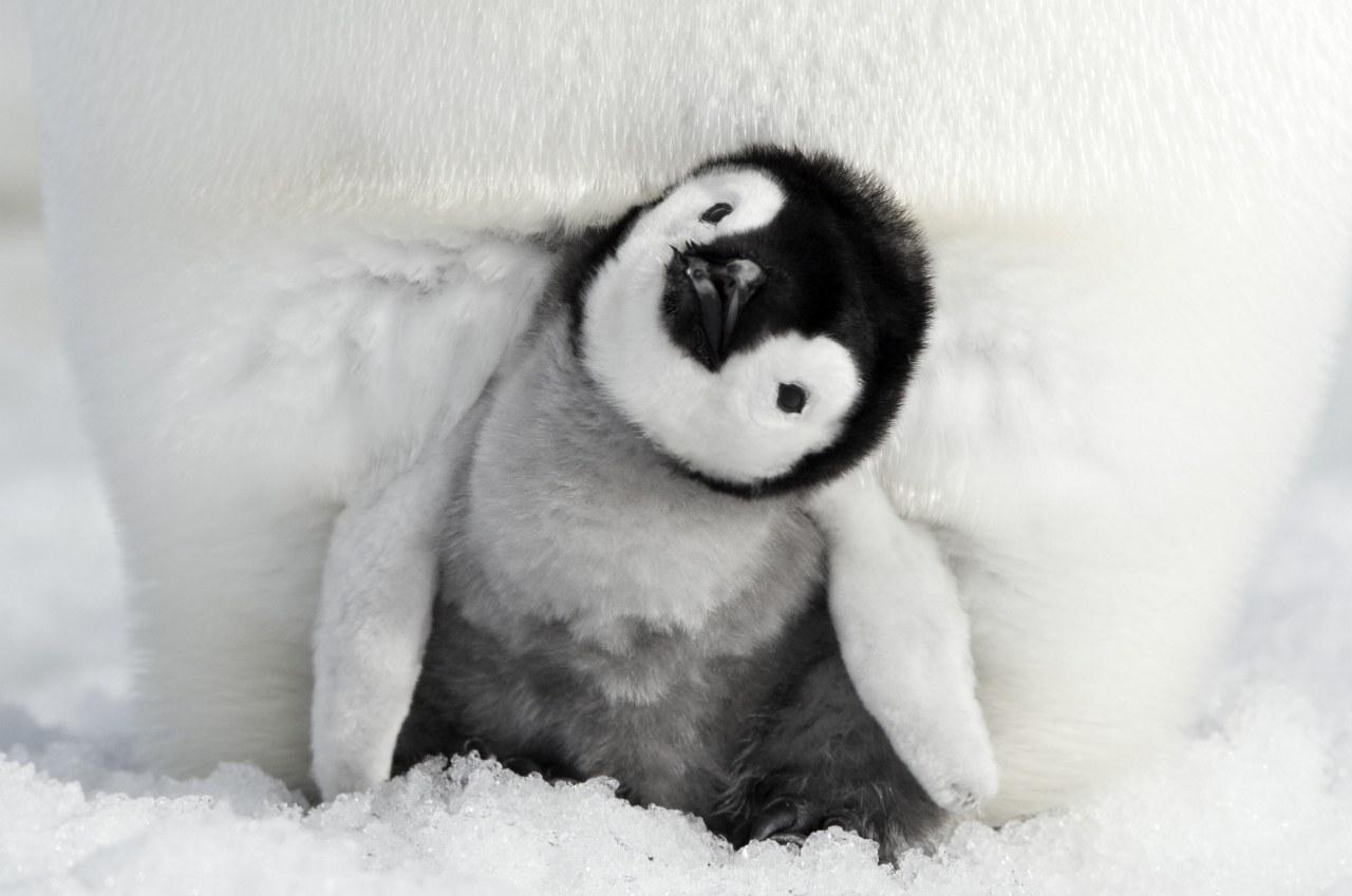 Die Reise der Pinguine 2 - Bild 2
