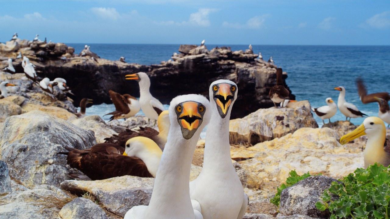 Galapagos 3D : Nature's Wonderland - Bild 1