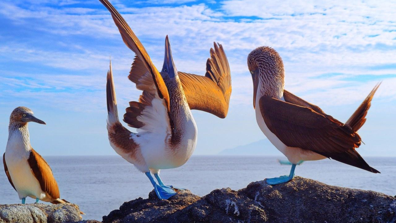 Galapagos 3D : Nature's Wonderland - Bild 2