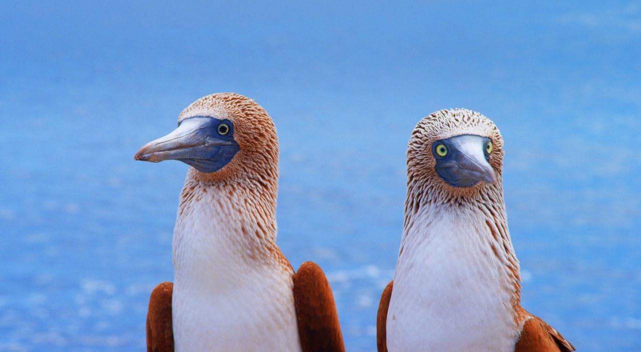 Galapagos 3D : Nature's Wonderland - Bild 3