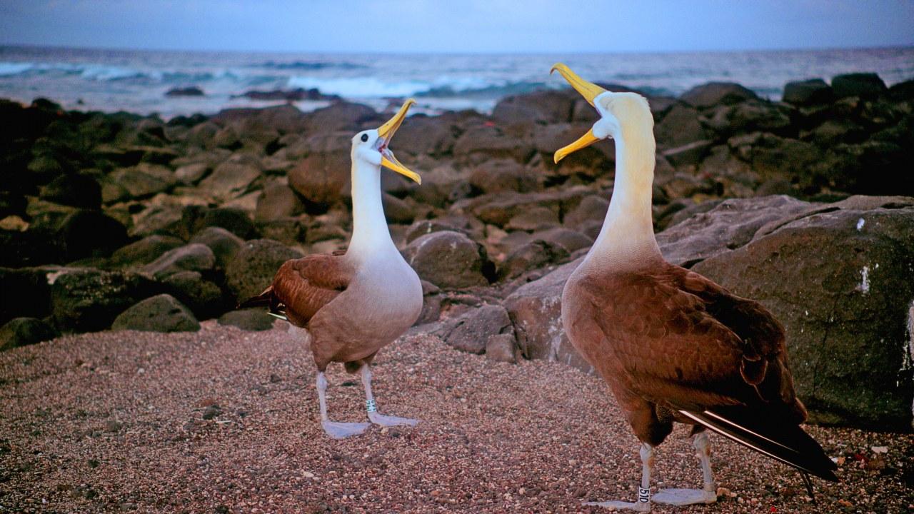 Galapagos 3D : Nature's Wonderland - Bild 4