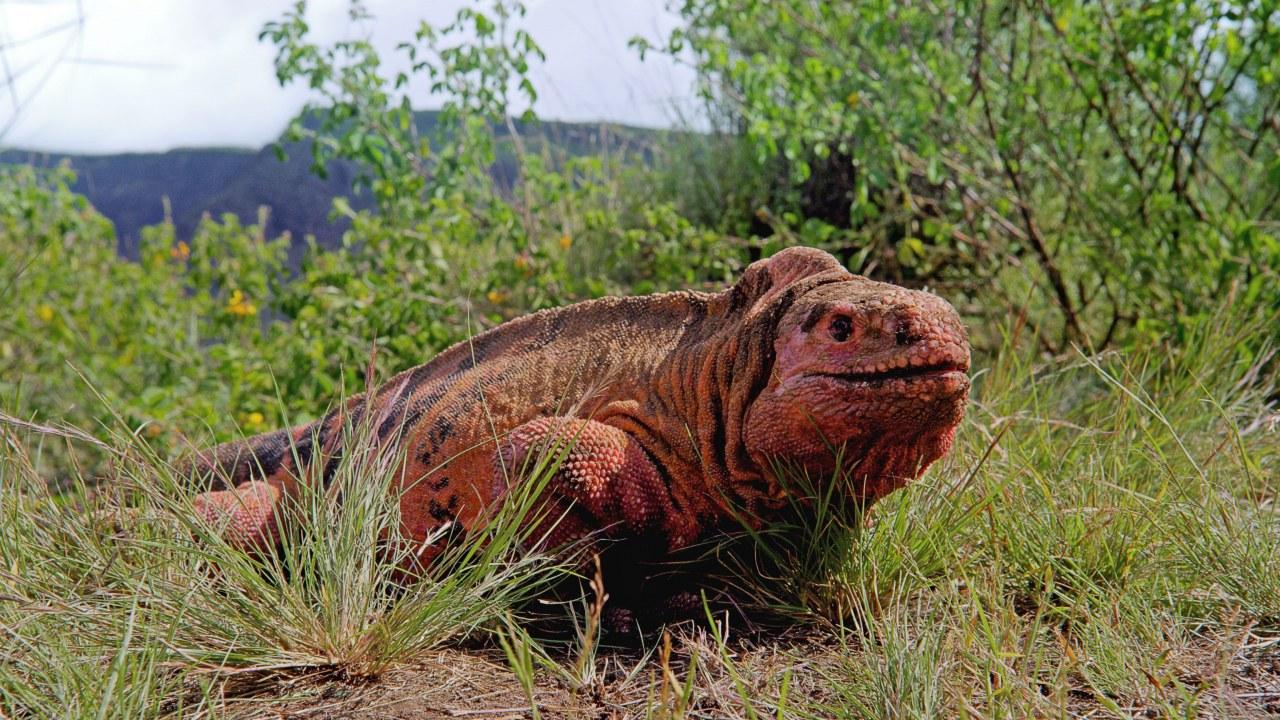Galapagos 3D : Nature's Wonderland - Bild 5
